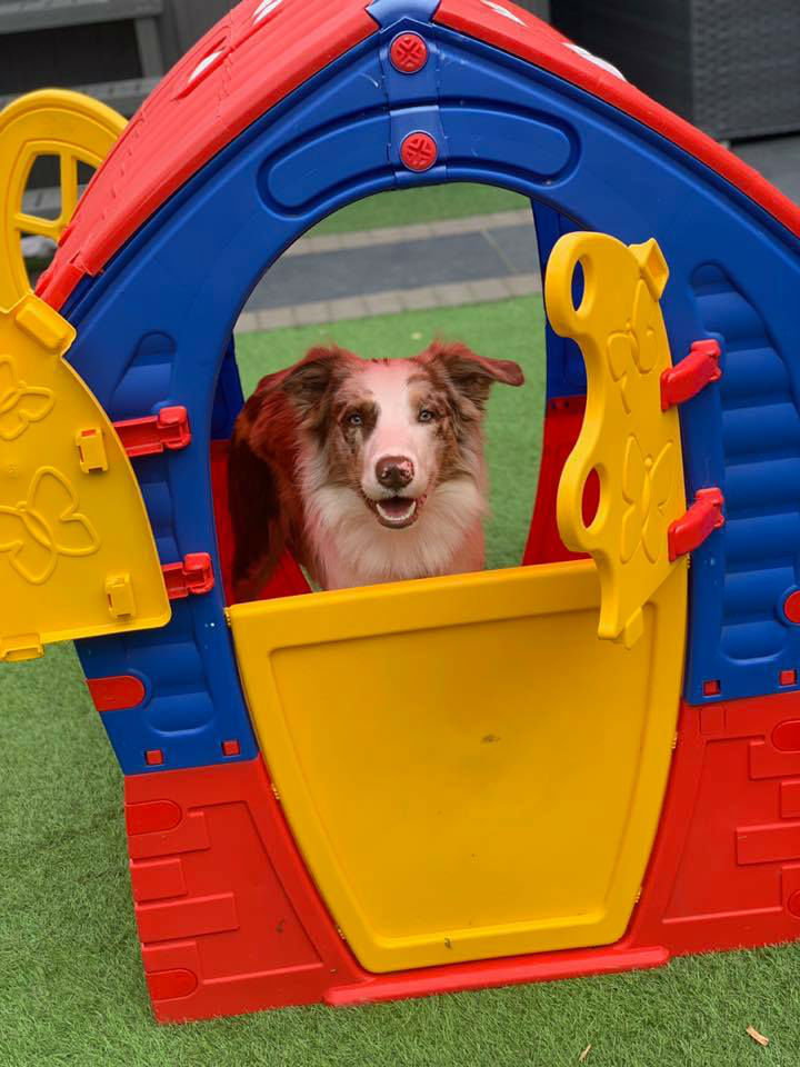 Dogs Playing In Playhouse