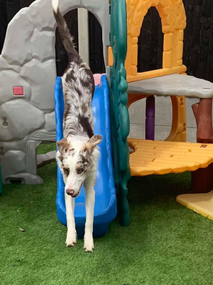 Dog Jumping Down A Slide