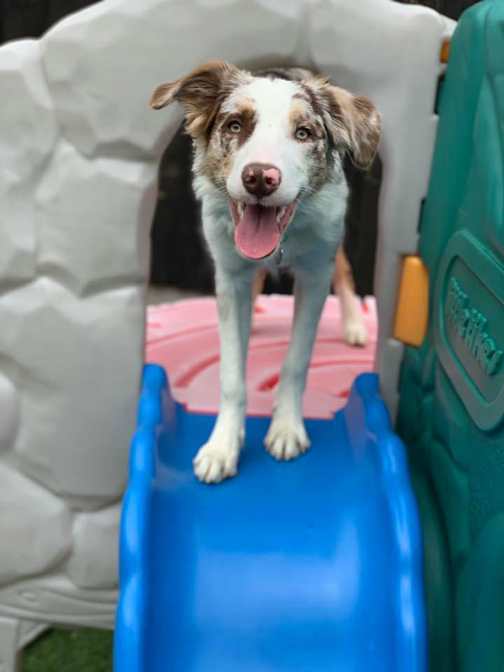 Dog At Top Of A Slide